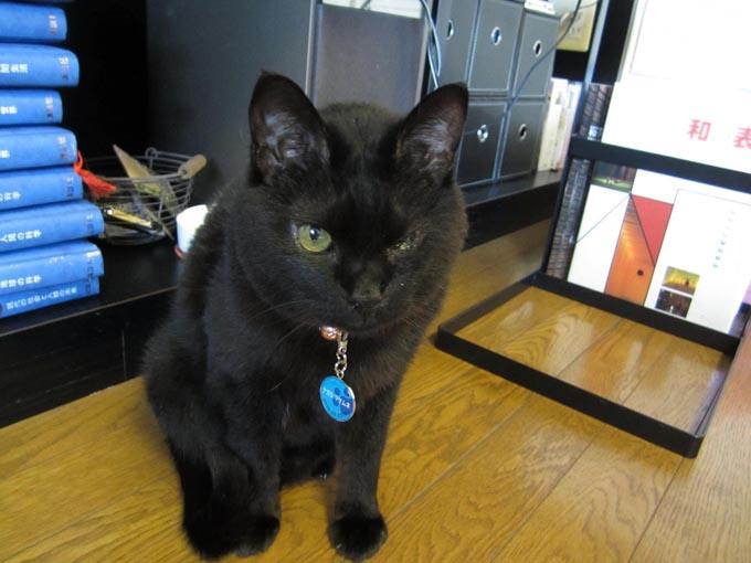 ペット 猫 ネコ ねこ 病院 動物病院 事故