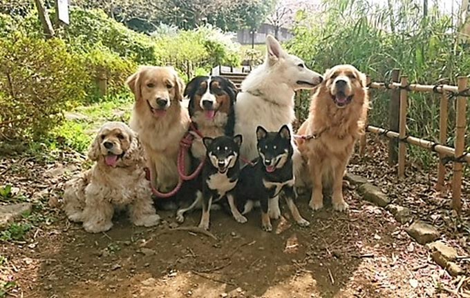 犬 いぬ イヌ ペット トルコ 野犬 セラピー犬 保護 うつ病 自閉症