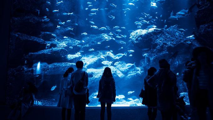 水族館が暗いのは、魚を思いやる知恵と工夫のマジック