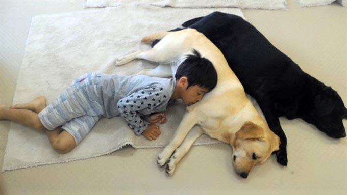 トルコの野犬に導かれ、日本でセラピー犬と触れ合える場所を開設!