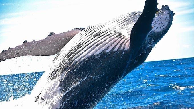クジラは水分を海から摂れない~オキアミを餌に選んだ理由