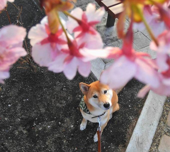 人と犬との憩いの場所 セラピードッグ 犬 保護犬 セラピー 鬱 うつ 引きこもり