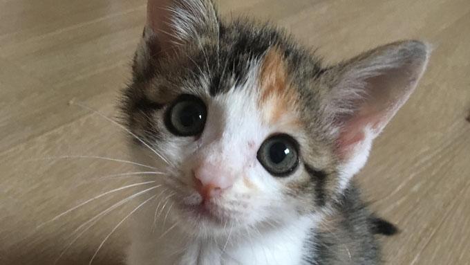 感染症に勝った奇跡の子猫! ママ獣医師のミルクボランティア奮闘記