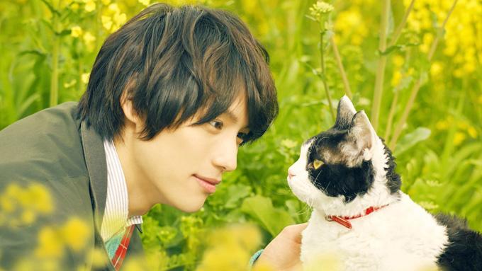 名優顔負けの演技をみせる、あのネコちゃんは誰?