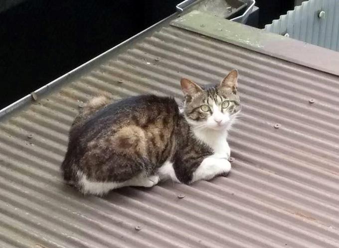 ねこ ネコ 猫 ペット 不妊 治療 犬 イヤーカット 去勢 手術 ヒーリングゆう