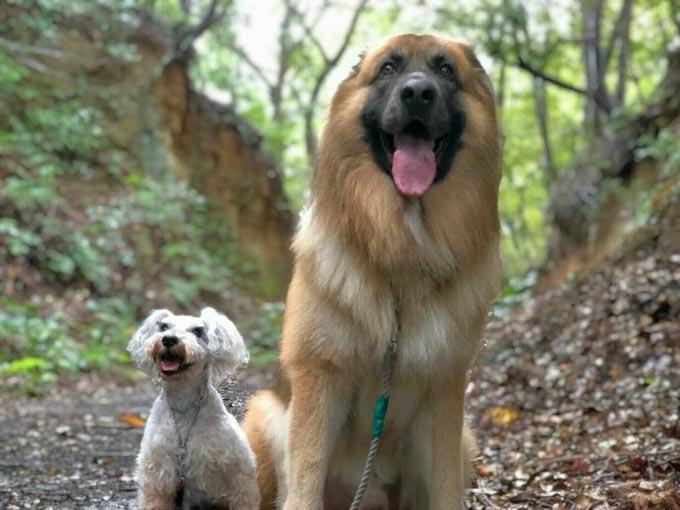 セラピードッグ トレーニング アニマル セラピスト 犬 イヌ いぬ トルコ