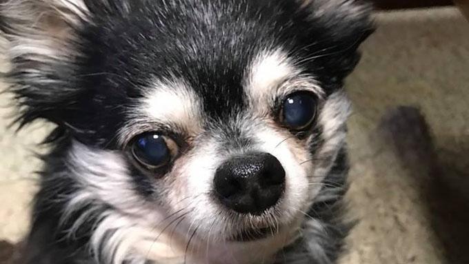 弟犬を救った兄犬! 西日本豪雨の実話を絵本に残す活動の輪が拡大中