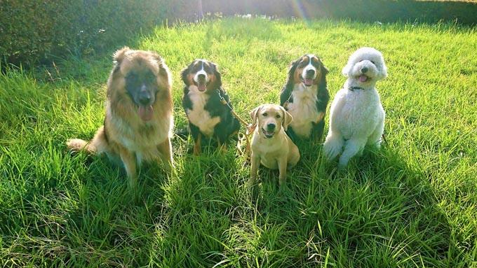 愛犬の苦労は別の犬で返す! セラピー犬トレーナーの決意と挑戦の日々