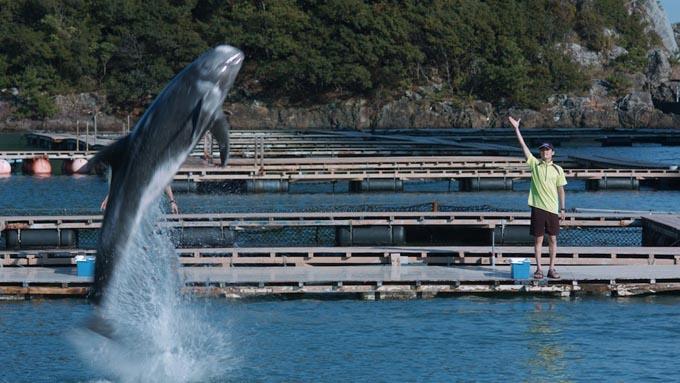 クジラと触れ合える、日本で唯一の博物館をご存知ですか?