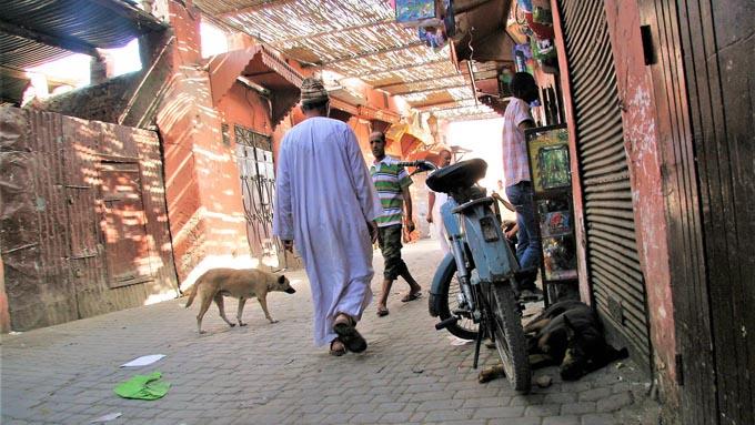 モロッコの犬は自由!?  旅先で出会ったイスラムの国の犬写真