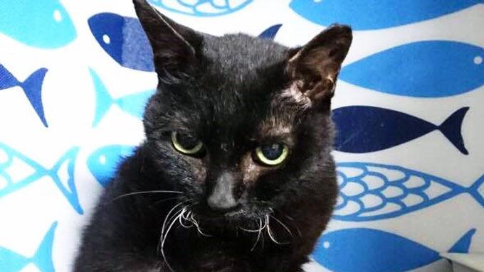 一目惚れした保護猫のために実家を出る! ハタチの決心と猫への愛