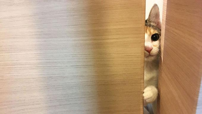 家族はどこ? 保護猫のためにママ獣医師が社会化トレーニング