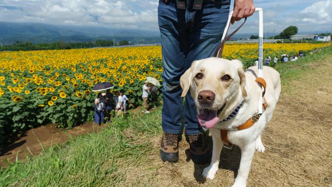 8歳から夢見た盲導犬との生活~4頭が自立へ導き世界を広げてくれた!