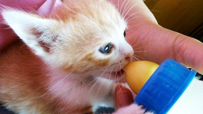 気づけば猫のミルクボランティア 旅先で拾った猫が人生を変えた!
