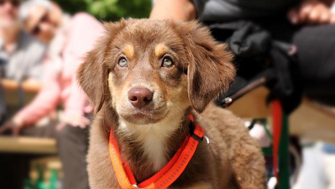 犬の目はなぜ写真を撮ると赤や緑に光るのか?