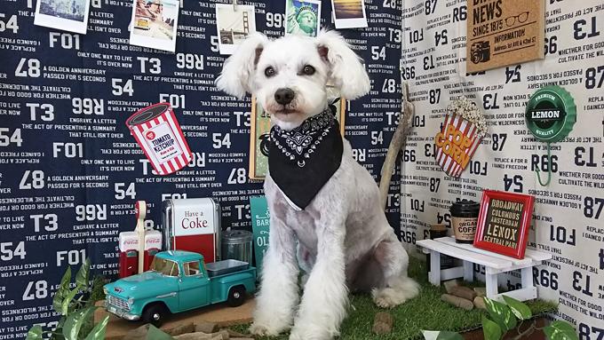 愛犬は映画デビュー&アラフォー飼い主はトリマーになり青森にUターン~愛犬が変えた人生