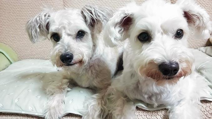 難産の愛犬の助産で大慌て! 子犬の運命と人生を変えた犬との生活