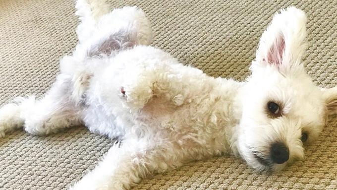 3.5本脚の人見知りの保護犬が救ったペットロス