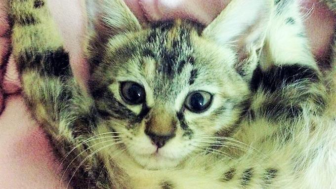 ペットと人の両方の防災士になる! 動物看護士を決意させた保護猫の存在