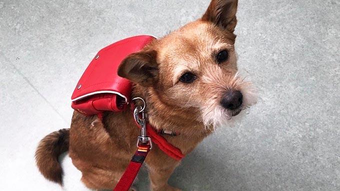 被災地を1ヵ月放浪した犬が、人を癒すセラピー犬に