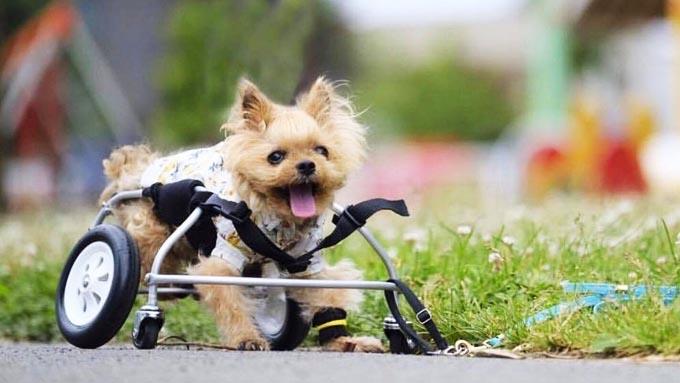 作り続けたペット用車椅子1万台分の笑顔は、亡き愛犬のおかげ