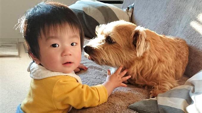 育児疲れを癒し、子育てを手伝う愛犬3頭との日々が宝物