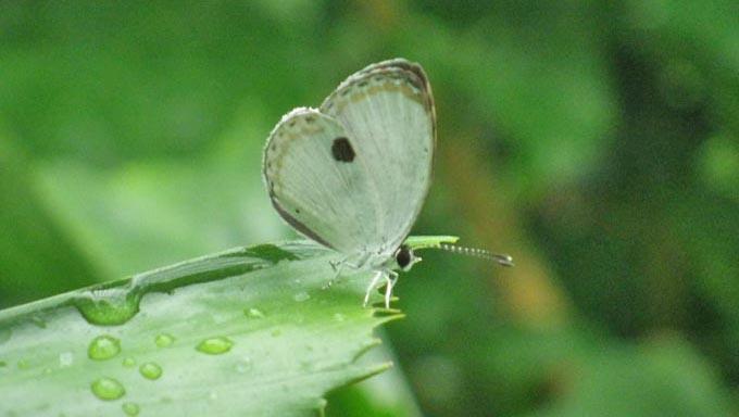 「絶滅危惧種のチョウを守ることは、生き物全体を守ること」~その理由とは?