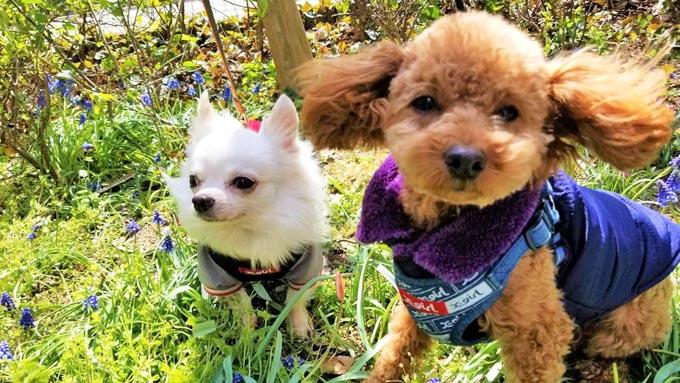 咬みつき保護犬に親友を~同じ境遇の保護犬同士を結びつけた家族の願い