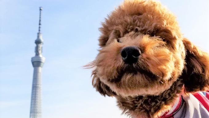 咬みつく保護犬との流血生活を乗り越えた3人家族の物語