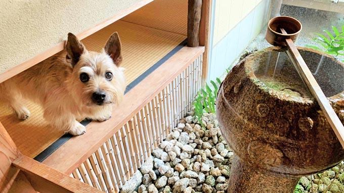 老犬とウキウキしたい! 旅行で愛犬2頭と思い出作り