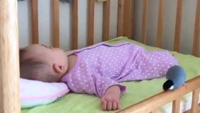 赤ちゃんのそばにいた文鳥 数秒後の展開に「泣けてくる」「優しい世界」