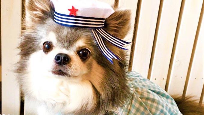 チワワの衝動買いを妹に説教した姉が導かれた、犬の洋服づくりの仕事