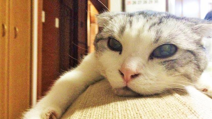 4歳で逝った愛猫が、ペットロスにも陥ったトリマーに残したギフト