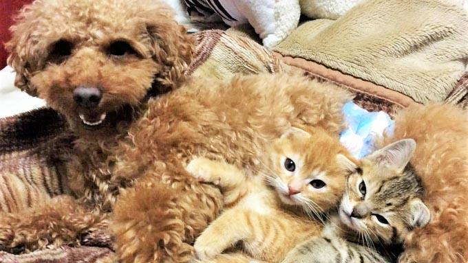 愛猫の出産と指のない愛犬が、トリマーに教えてくれたこと
