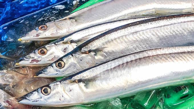 サンマの漁獲枠導入で合意~中国は本当に守るのだろうか