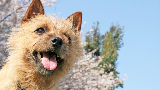 犬に飼い主のストレス症状が伝染!~理由を知れば愛おしさ倍増&納得~