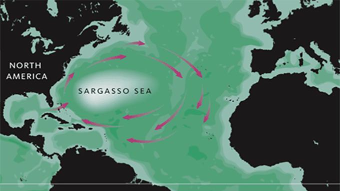 世界で最も透明度が高い海「サルガッソー海」