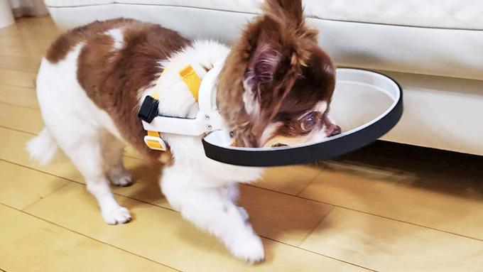 失明した愛犬への後悔を生きている盲目の犬たちの喜びに変えたい! 脱サラ愛犬家の挑戦物語