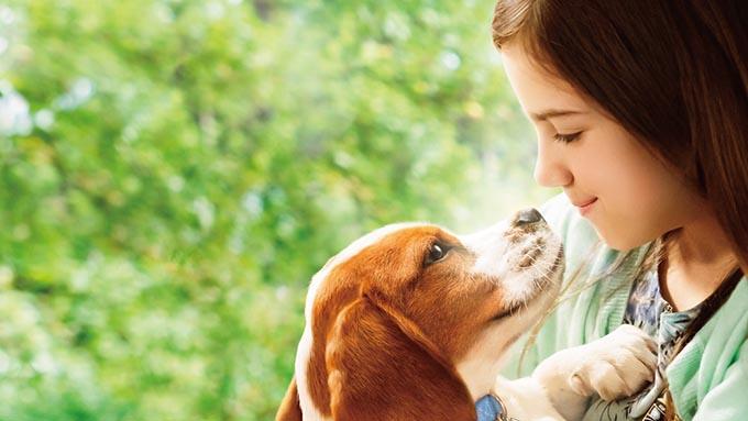 家族の幸せのために! 何度も生まれ変わる犬と人間のラブストーリー