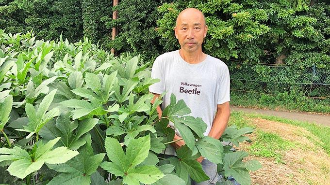 時間無制限で野菜が採れる観光農園「秦野いとう農園」