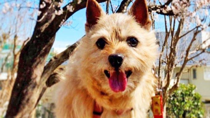 """老犬の""""心""""の健康も大切だと知った飼い主の行動の変化とは"""