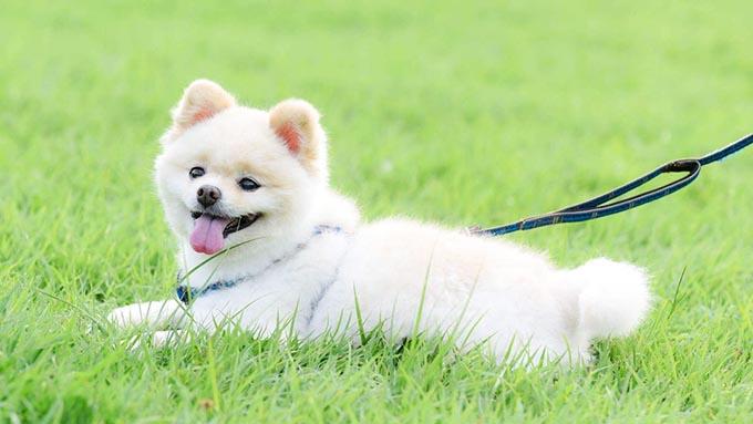 老犬の介護士になる! 専業主婦の人生を変えた1頭の愛犬と歩んだ14年半