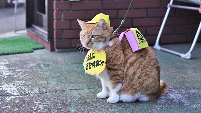 """コスプレ姿で児童を見守る看板猫は、突然現れ飼い主の心を救った""""恩猫"""""""