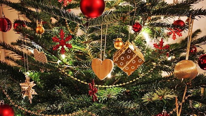 なぜクリスマスツリーに使われるのは「もみの木」なのか