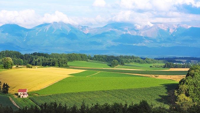 国内の農業対策はどうあるべきか